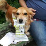 Ein Hund hat bei der Samplingpromotion in Berlin sich eine Produktprobe geschnappt